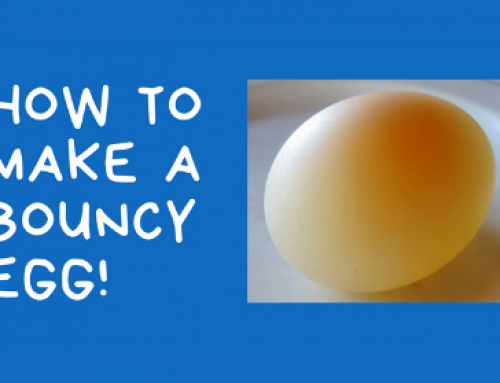 How to Make a Bouncy Egg