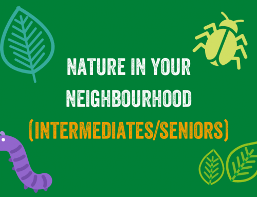 Nature in your Neighbourhood (Intermediate/Seniors)