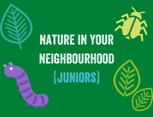 Nature in your Neighbourhood (Juniors)