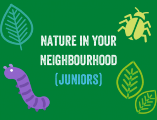 Nature in your Neighbourhood (Juniors)