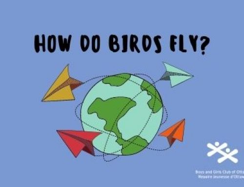 How Do Birds Fly?